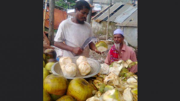 বিলুপ্তির পথে পরিবেশ বান্ধব তালগাছ : হারিয়ে যাচ্ছে 'বাংলা বাবুই'